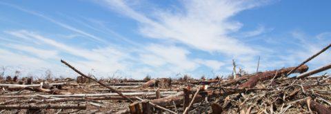 Klimagerechtigkeit  Ressourcengerechtigkeit  Menschenrechte